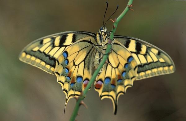 """""""bye bye butterfly"""", farfalle in mostra al Museo di Scienze Naturali dell'Alto Adige"""