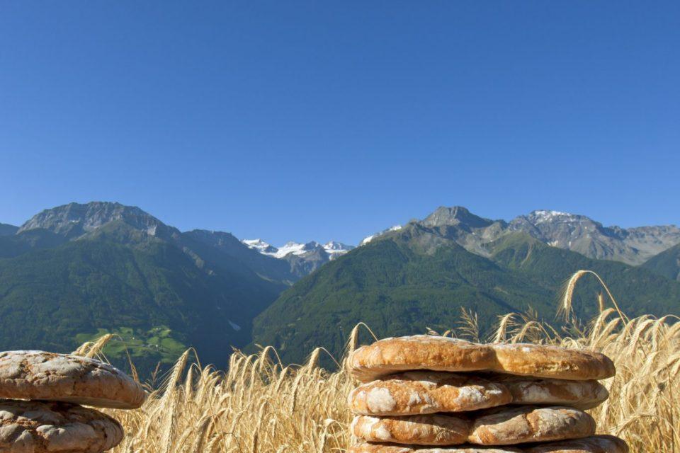 Cereali dell'Alto Adige, i risultati raggiunti nel 2017