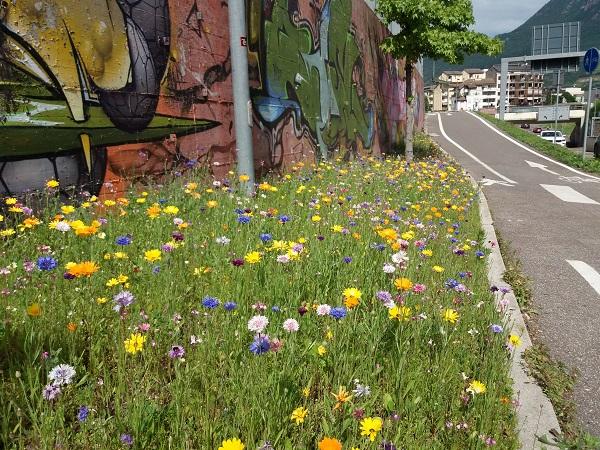 Bozen. Biodiversität am Straßenrand